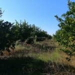 Farming Land with Orange Grove for Sale - Featured